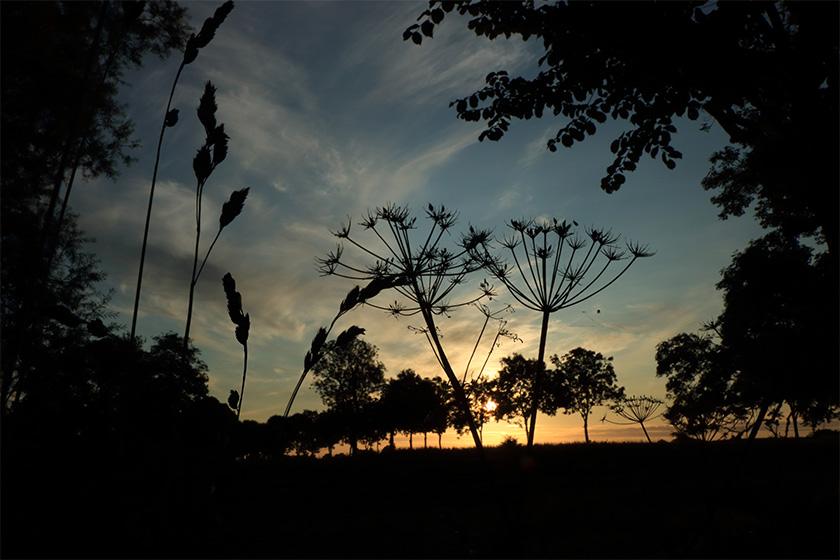 natur.himmel.blå.strå.foto.mette.bundgaard