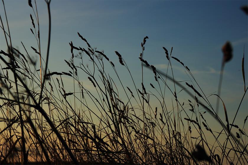 natur.himmel.strå.foto.mette.bundgaard